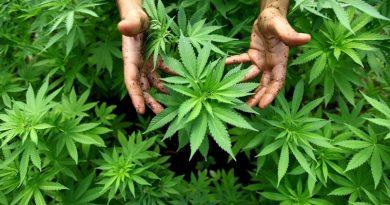 ¿Deben legalizarse las drogas? ¡Claro que no!