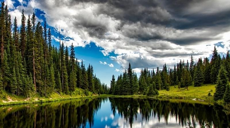 22 Razones para recuperar nuestros Bosques