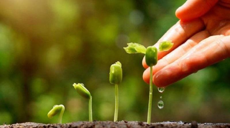 La paciencia es la actitud virtuosa ante una dificultad inevitable