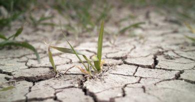 Ignora ONU costos reales de plan contra calentamiento global